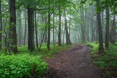 Путь грязной улицы через лес Стоковая Фотография RF