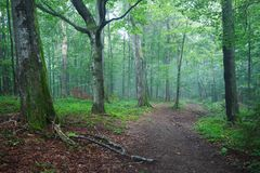 Путь грязной улицы через лес Стоковое фото RF