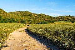 путь грязной улицы около зеленого поля стоковое изображение