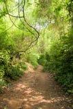 путь джунглей грязи Стоковое Изображение