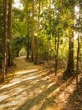 путь джунглей Стоковые Изображения