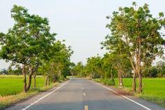 Путь дороги в центре дерева поля риса и голубого неба Стоковые Фотографии RF