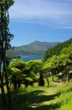 Путь дерева папоротника в Marlborough звучит Новая Зеландия Стоковые Изображения