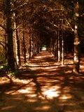 Путь дерева Стоковые Изображения RF