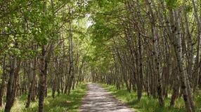 Путь дерева Стоковая Фотография RF