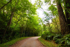 Путь деревьев Стоковые Изображения RF