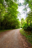 Путь деревьев Стоковые Фотографии RF