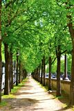 Путь деревьев Стоковая Фотография