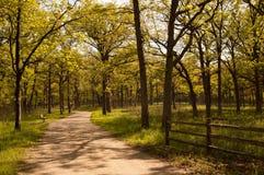 Путь леса весной Стоковые Изображения RF