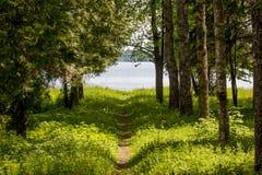Путь леса водя к воде Стоковая Фотография RF