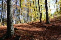 Путь леса в осени покрытой с листьями Стоковые Фото
