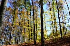 Путь леса в осени покрытой с листьями Стоковые Изображения RF