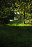 Путь леса вдоль пруда Стоковое фото RF