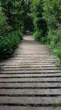 Путь леса в Тичино Стоковое фото RF