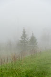 Путь леса в тумане Стоковое фото RF