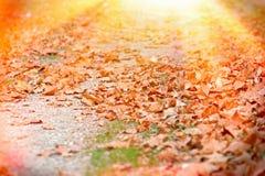 Путь леса покрытый с листьями осени Стоковые Изображения RF