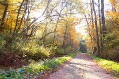Путь леса при деревья сдобренные над следом в вечере Стоковые Изображения RF