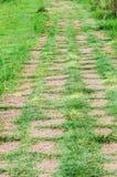 Путь леса. Стоковое фото RF