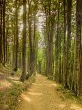 Путь леса стоковое изображение
