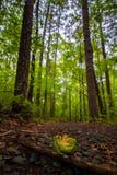 Путь леса 3 Стоковые Изображения RF