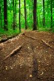 Путь леса 4 Стоковые Изображения
