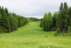 Путь леса Стоковое Изображение RF