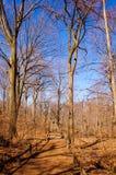 Путь леса Стоковая Фотография