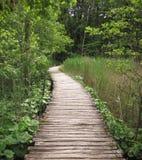 Путь леса Woody Стоковые Изображения RF