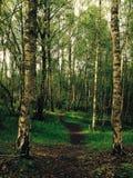 путь лесистый Стоковая Фотография