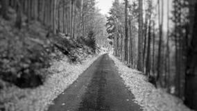 Путь жизни Стоковое Изображение