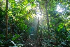 Путь джунглей через пышную растительность Стоковые Изображения RF