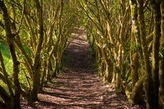 Путь джунглей Стоковое Изображение