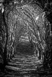 Путь джунглей Стоковая Фотография