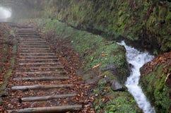 Путь журналов на туманном лесе вдоль dos Cedros Levada: trekking трасса от Fanal к Ribeira da Janela, Мадейре Стоковая Фотография