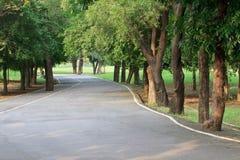 Путь завода и асфальта вала в общественном парке Стоковая Фотография