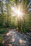 путь зеленого цвета пущи стоковое фото
