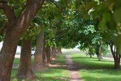 Путь зеленого цвета Стоковое фото RF