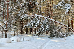 Путь зимы в лесе Стоковые Изображения