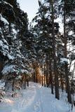 Путь зимы стоковые изображения rf