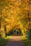 путь золота Стоковое фото RF
