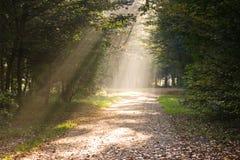 путь излучает солнечний свет стоковое фото rf