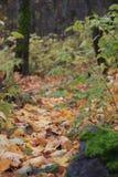 Путь 2 листьев осени Стоковое Изображение