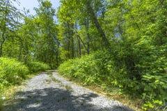 Путь или дорога в лесе Вашингтона, США Стоковая Фотография
