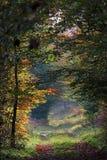 Путь и осенний подлесок Стоковая Фотография