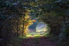Путь и осенний подлесок Стоковые Фото