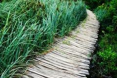 Путь и тростники стоковые изображения