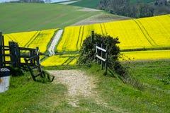 Путь и Rolling Hills сельской местности Стоковые Фото