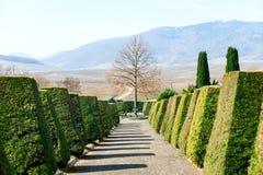 Путь кладбища с деревьями зеленого цвета фигурной стрижки кустов на сторонах Стоковое фото RF