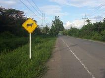 Путь коровы Стоковое Изображение