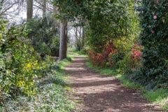 Путь который бежит через древесины Стоковое Изображение RF